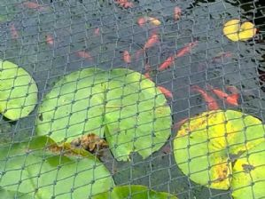 CHILD SAFETY POND NETTING  2.5M X3M PONDS,PITS